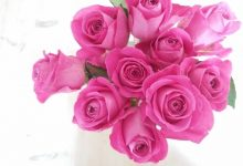 10 steps for looking after your supermarket roses